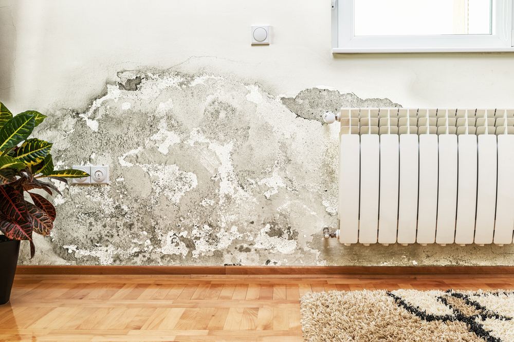 Do You Have Mold Growing in Your Home or Office?